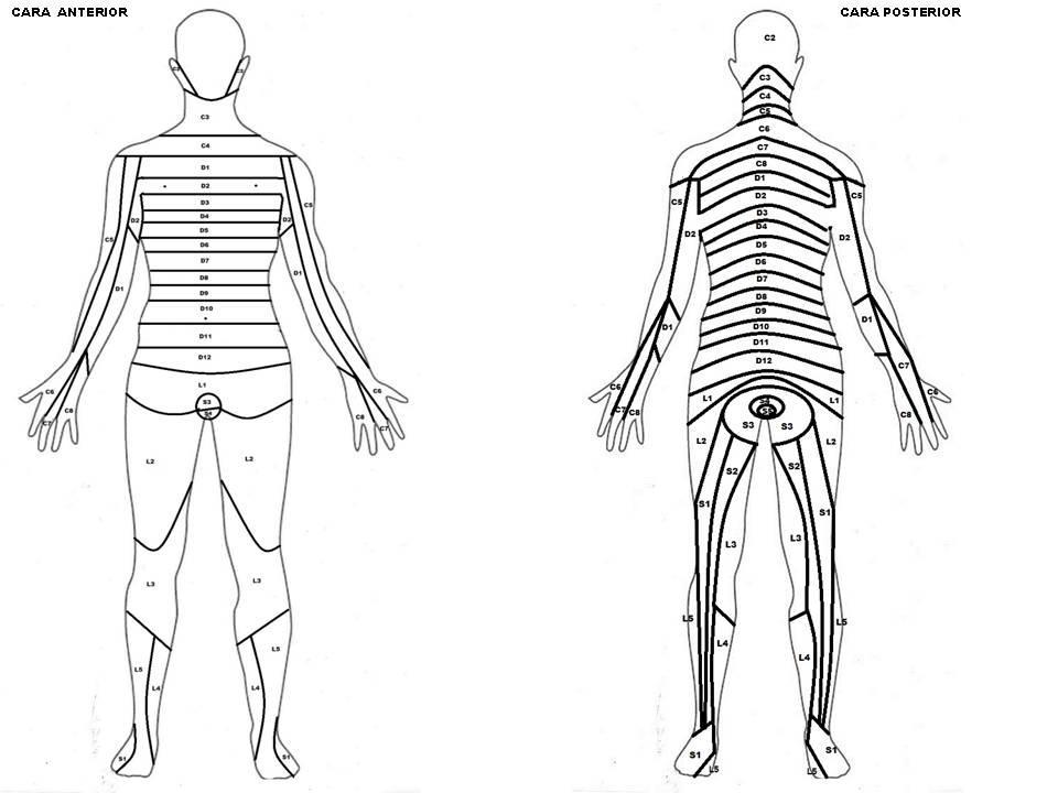 Síntomas sensitivos en las lesiones de nervios y raices espinales ...