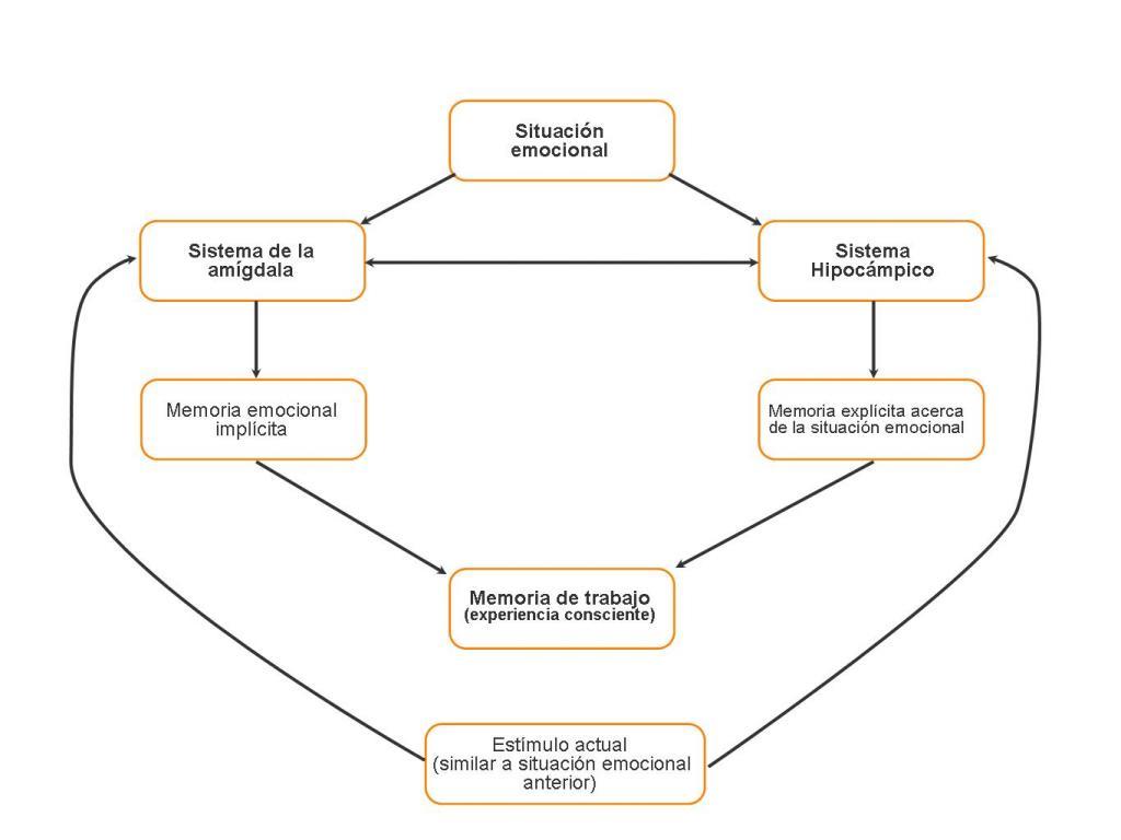 Circuito Del Habla : Bases neurobiológicas de las emociones neurowikia