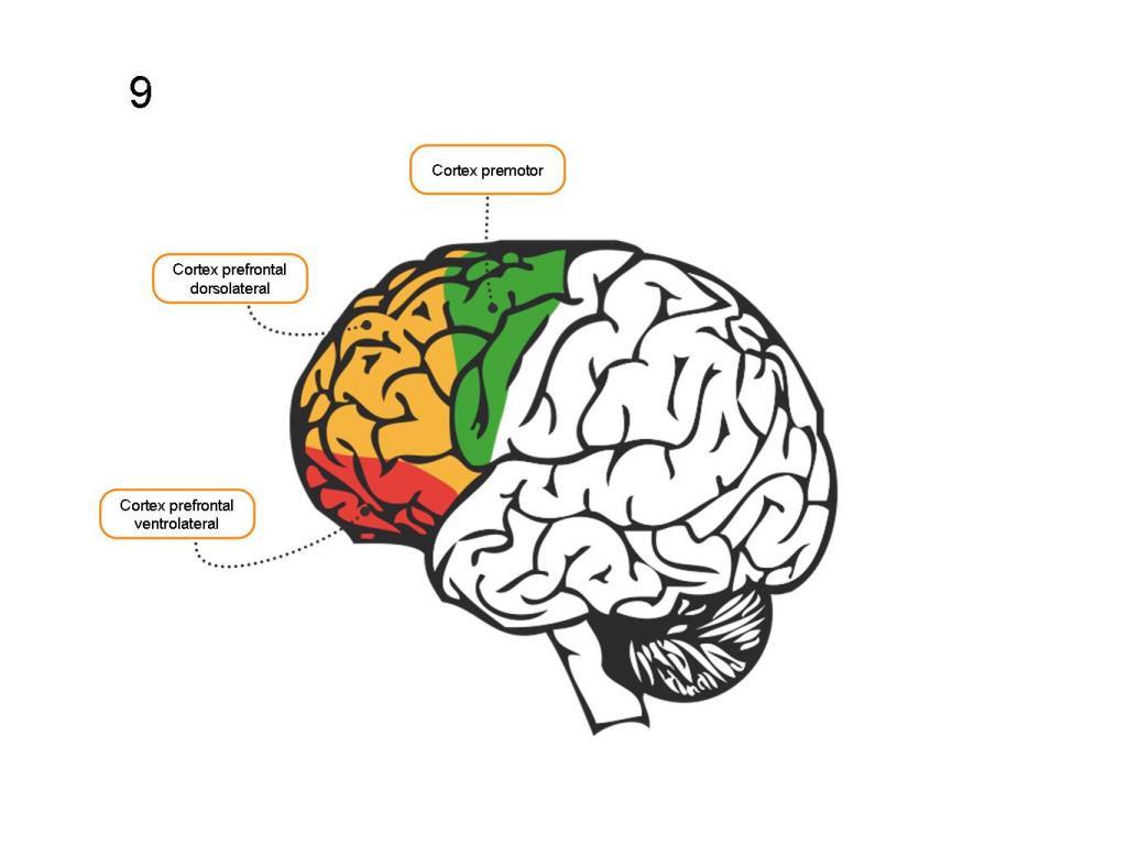 Bases Neurobiológicas De Las Emociones Neurowikia